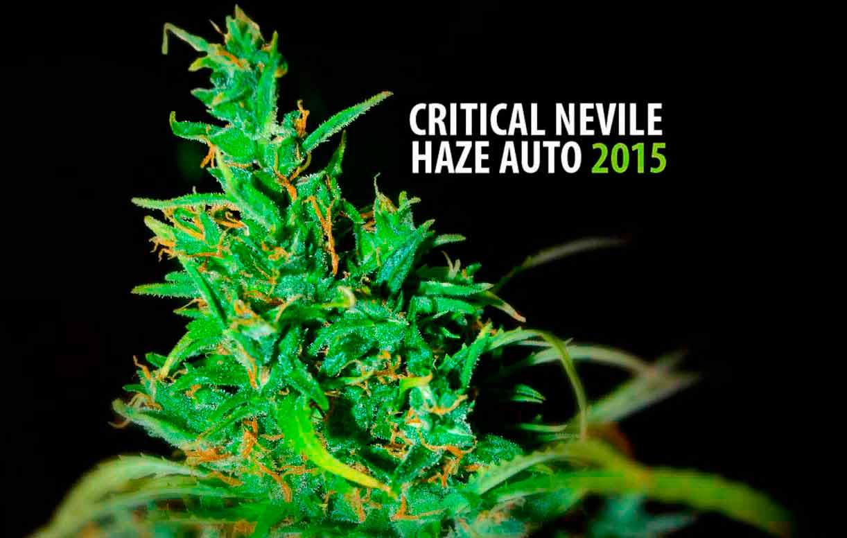 Critical Neville Haze Auto 2015