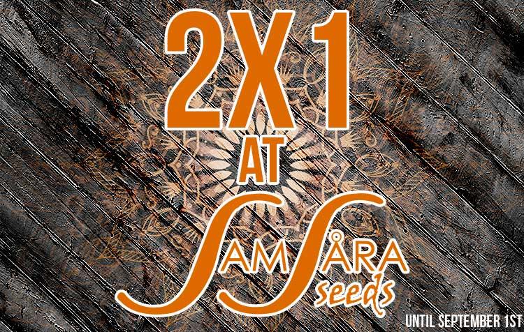 2x1 Samsara Seeds